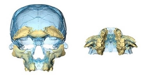 jebel irhoud facial reconstruction early homo sapiens