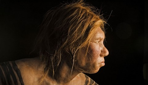 wilma, national geographic reconstituted neanderthal woman