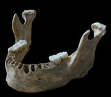 jawbone of Oase Man, modern human with a recent Neandertal ancestor